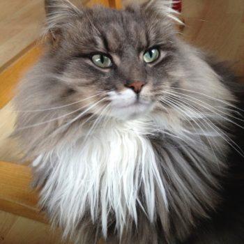 """Normalität und Alltag: unser Haustier """"Silpfi"""" versorgen und mit ihr schmusen können"""