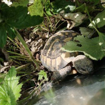 Normalität und Alltag: Das Beobachten der Schildkröten beruhigt und verlangsamt das Leben
